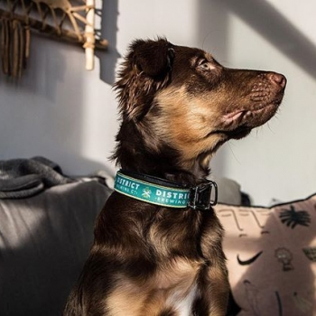 When you ❤️ your 🍺 & your 🐕  Gift your puppy a new District Collar for Christmas 🎄  Collars are made with bike inner-tube rubber and hand-sewn in Portland, Oregon. 50% of the profits from every collar sold is donated to local animal rescue